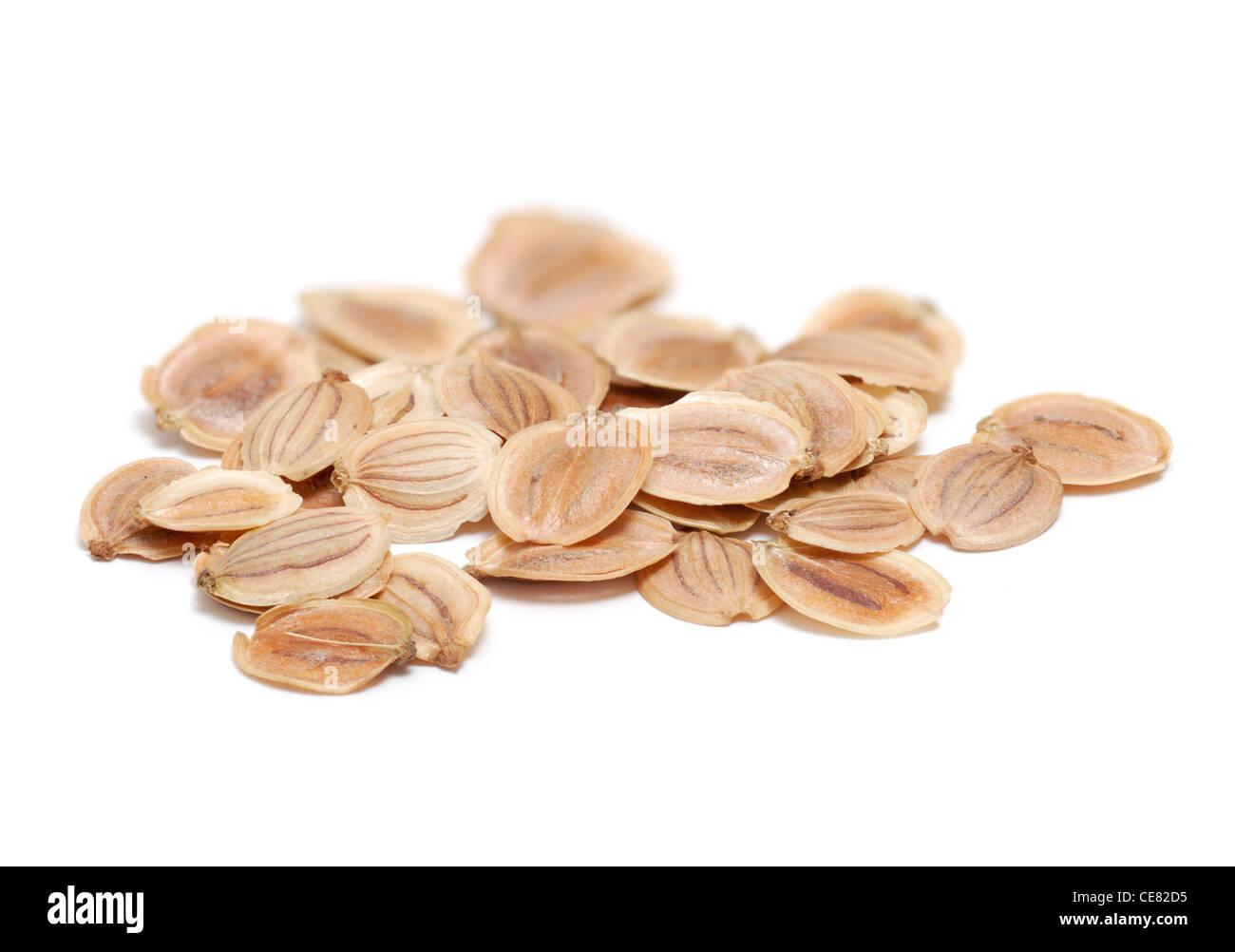 Pastinaca semi su bianco Immagini Stock