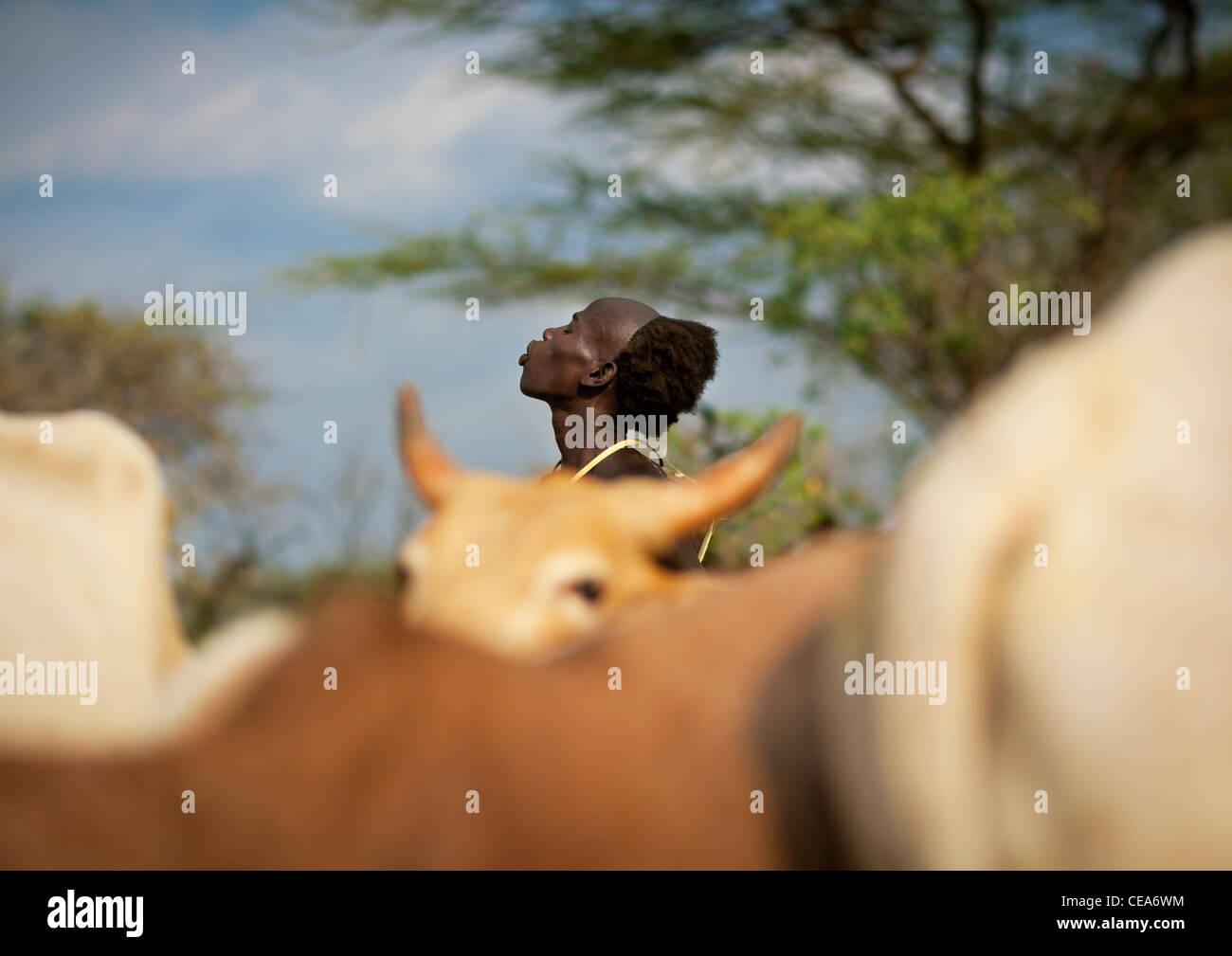Hamer Bull il ponticello ragazzo adolescente dietro la mandria prima cerimonia di salto Valle dell'Omo Etiopia Immagini Stock