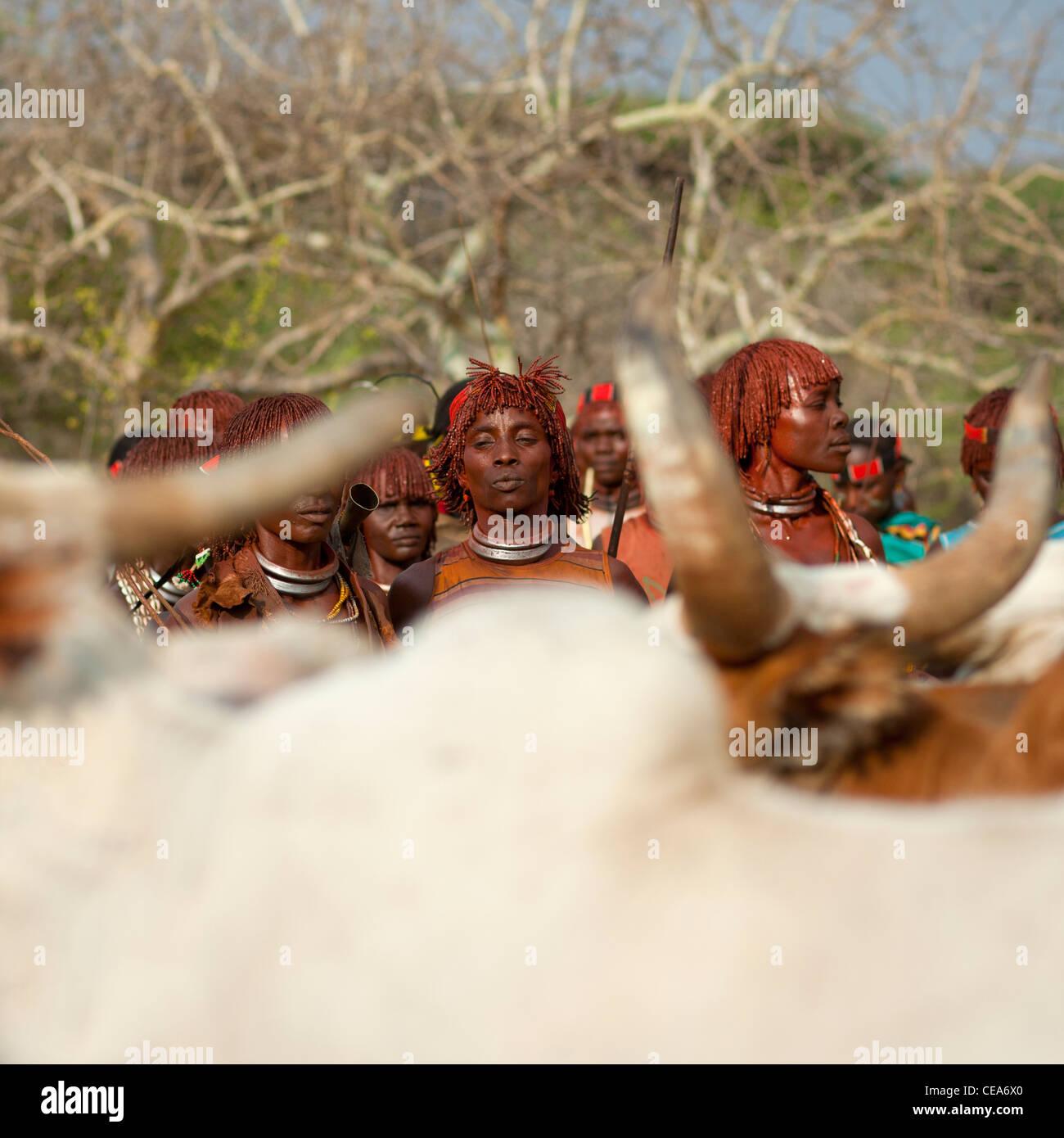 Hamer persone celebrare Bull Jumping cerimonia dalle tradizionali danze rituali e musica Valle dell'Omo Etiopia Foto Stock
