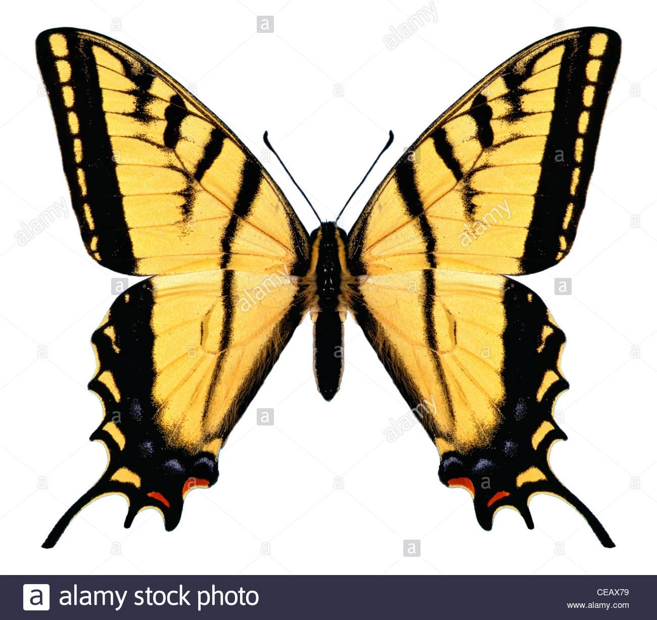 Butterfly immagine del computer, concetto, mistero Immagini Stock