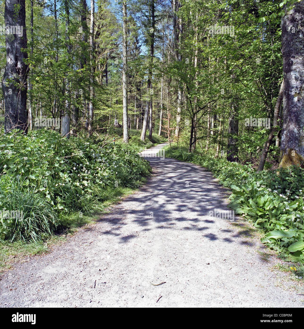 Soleggiato Percorso boschivo in primavera, Mabie foresta, Dumfries & Galloway, Scotland, Regno Unito Immagini Stock