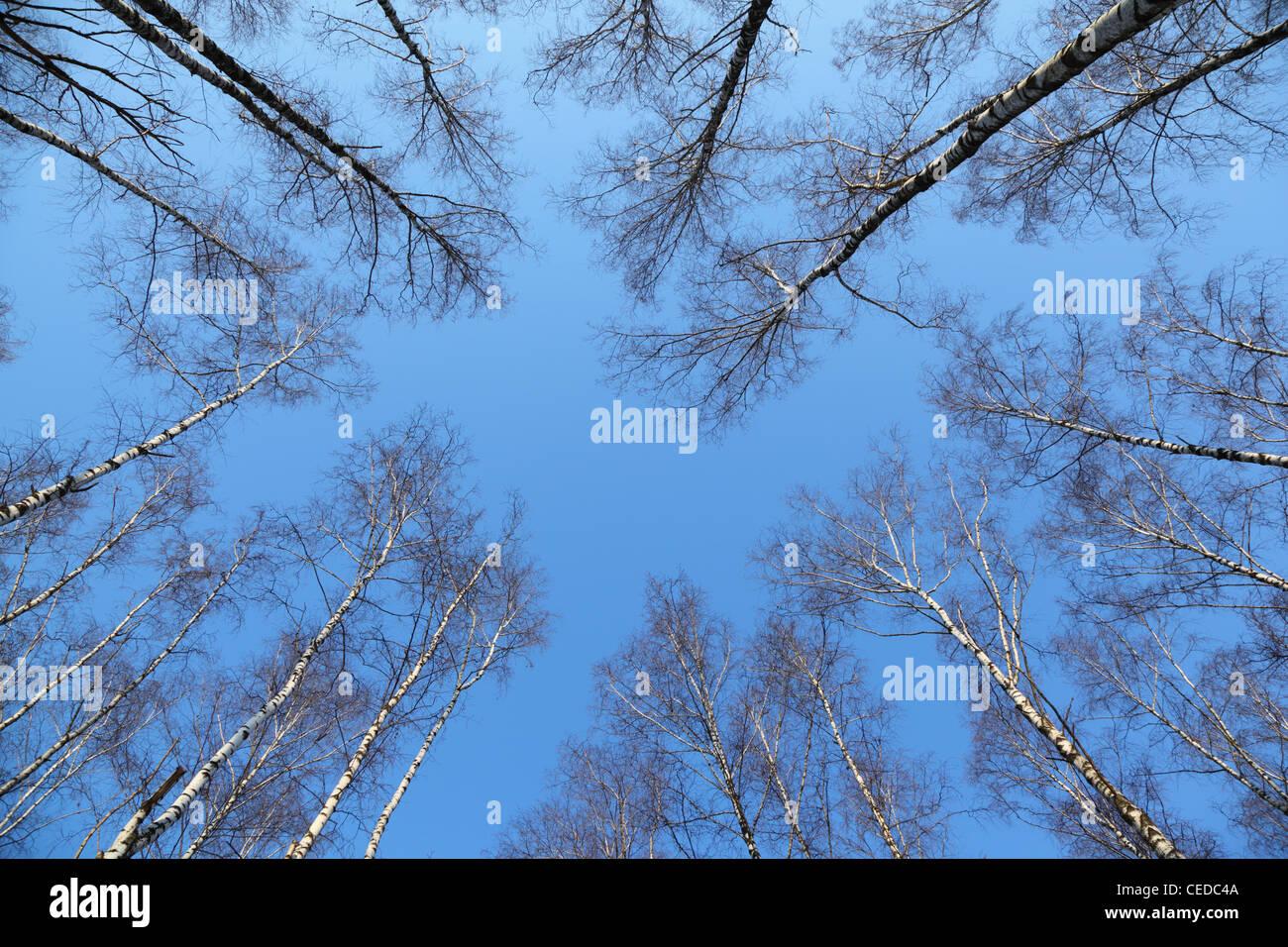 Parte superiore degli alberi Immagini Stock