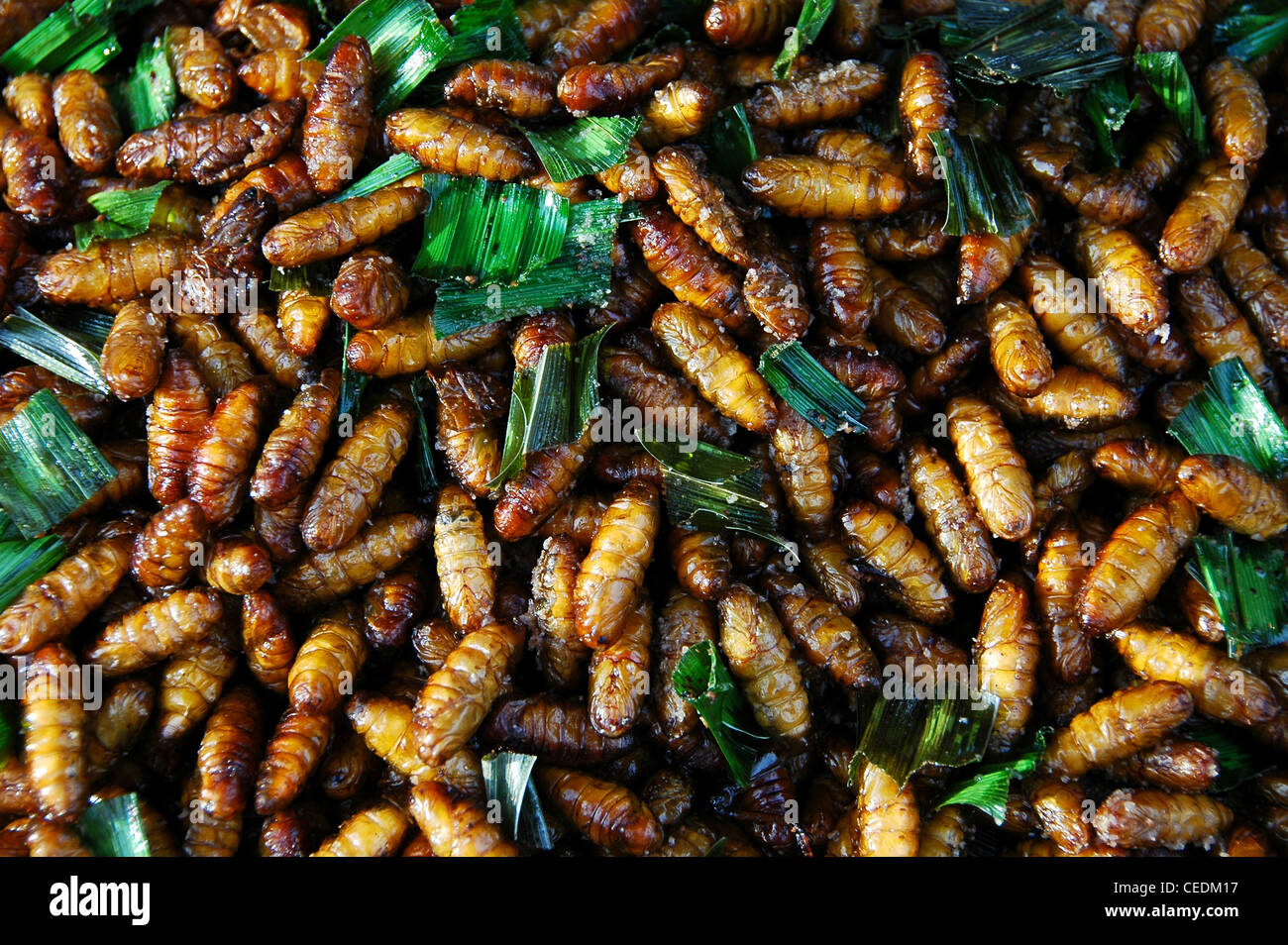 Cucina di strada bancarelle che vendono gli insetti fritti bangkok