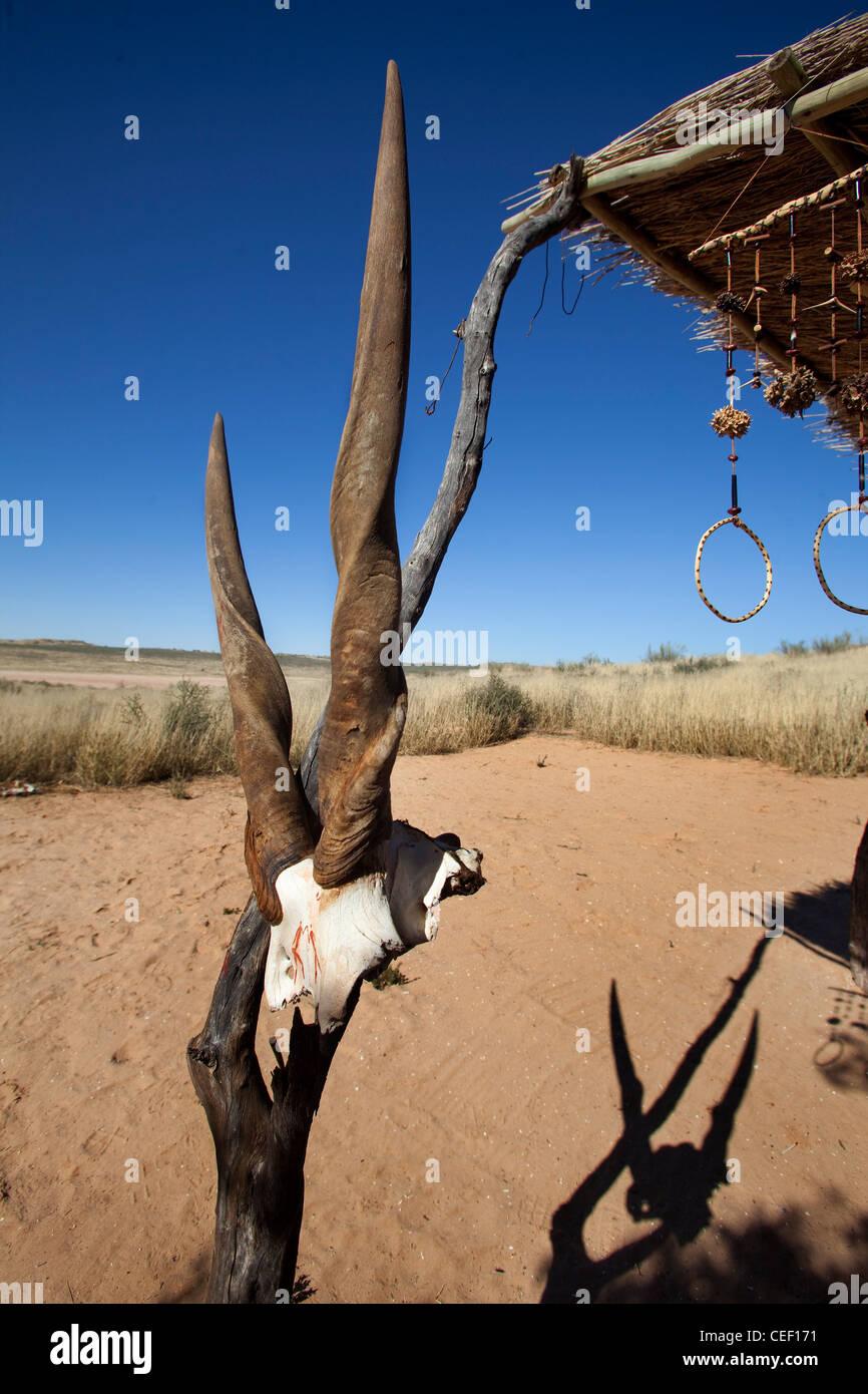 Antelope cranio e palchi appeso a un Boscimane capanna del Immagini Stock
