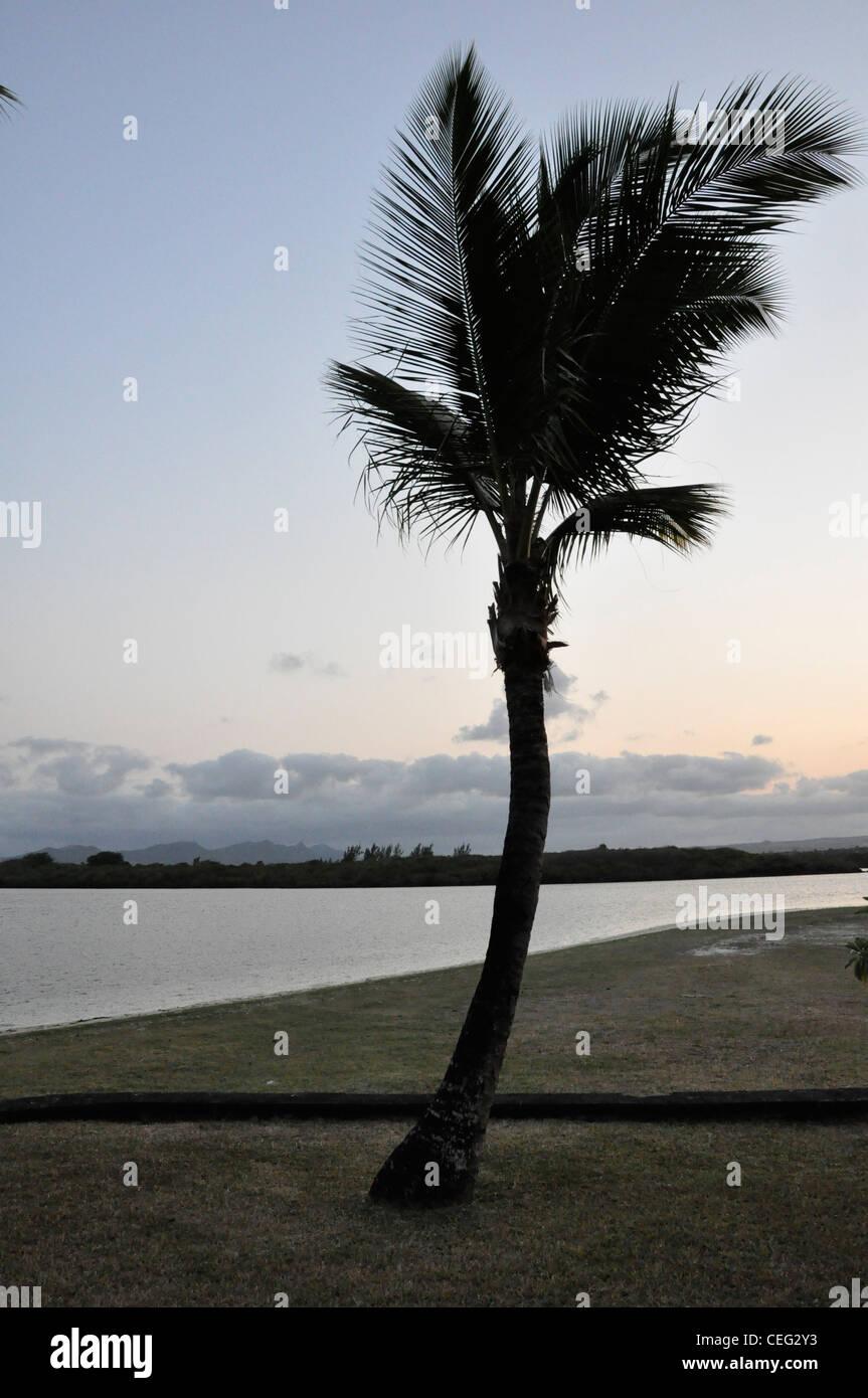 Palm Silhouette sub tropicale forme geometriche sea scape Immagini Stock