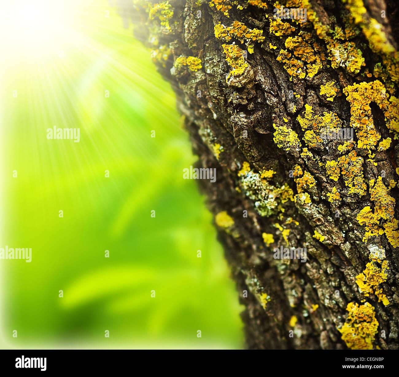 Foresta di primavera sfondo astratto, vicino sul vecchio albero tronco, soleggiata giornata di primavera, la bellissima Immagini Stock
