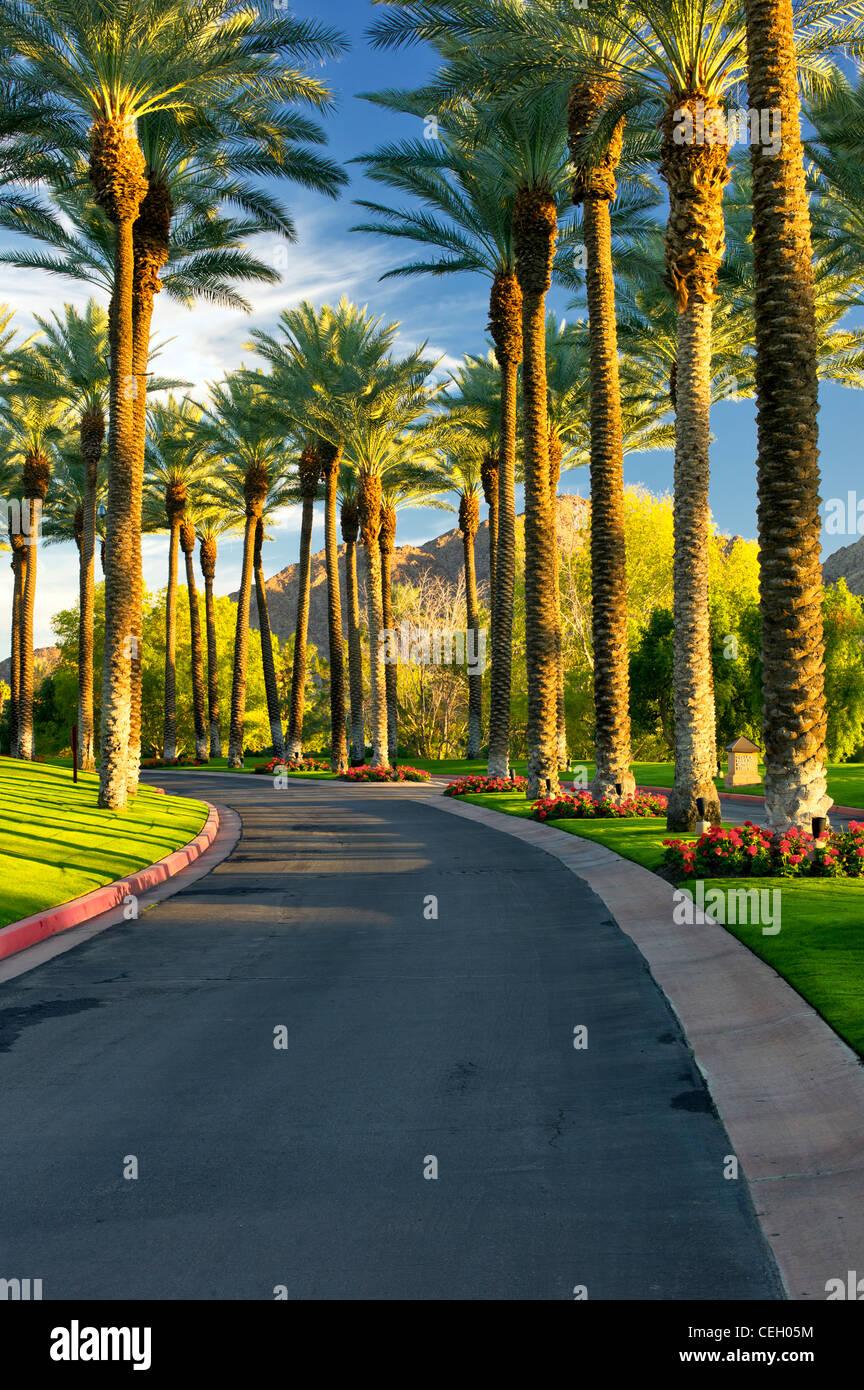 Strada fiancheggiata da palme. Palm Desert, California Immagini Stock