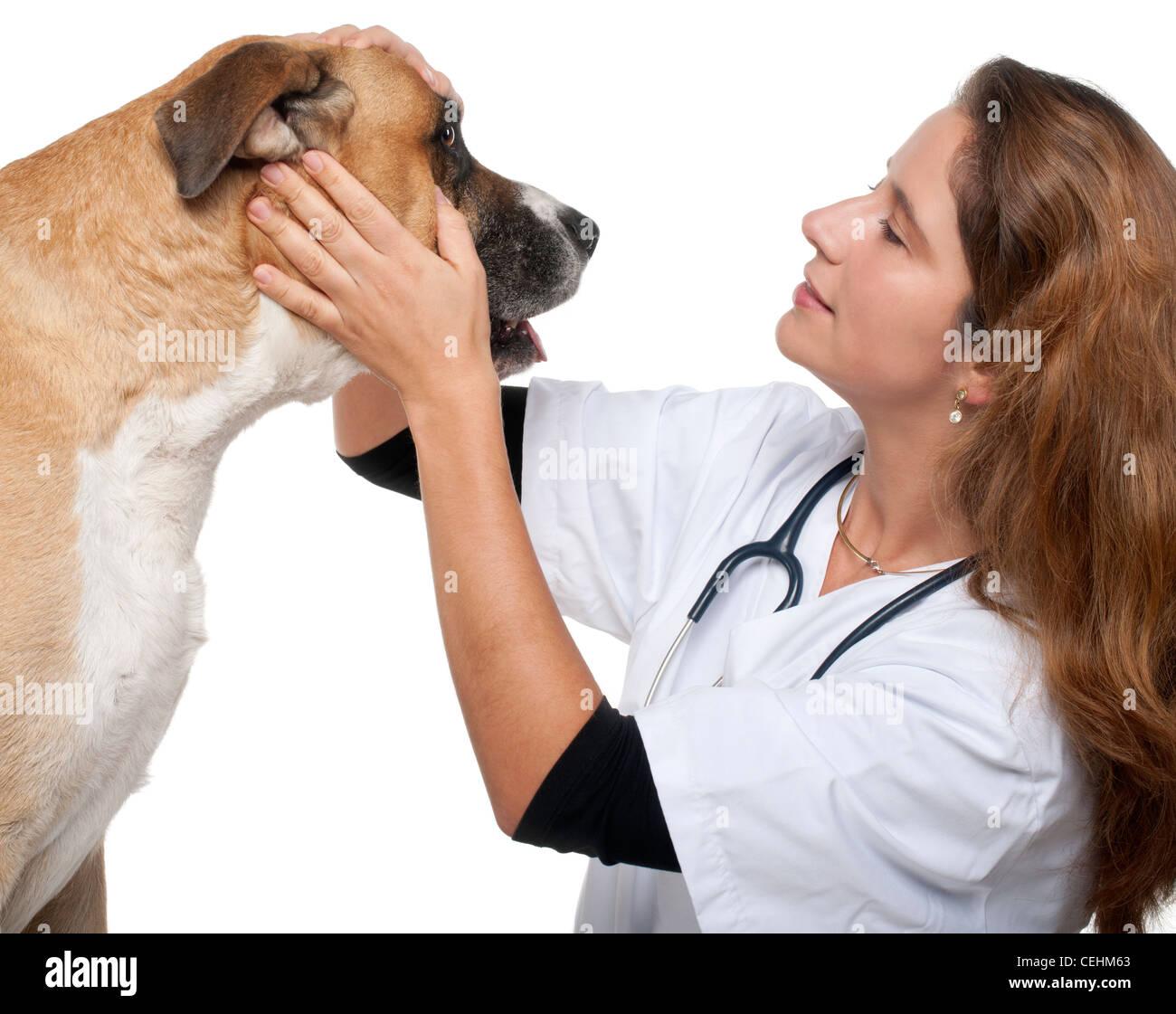 Vet esaminando un misto di cane di razza di fronte a uno sfondo bianco Immagini Stock
