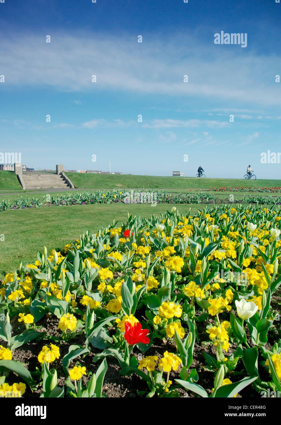 Aiuole fiorite sul lungomare di Cullercoats. Immagini Stock