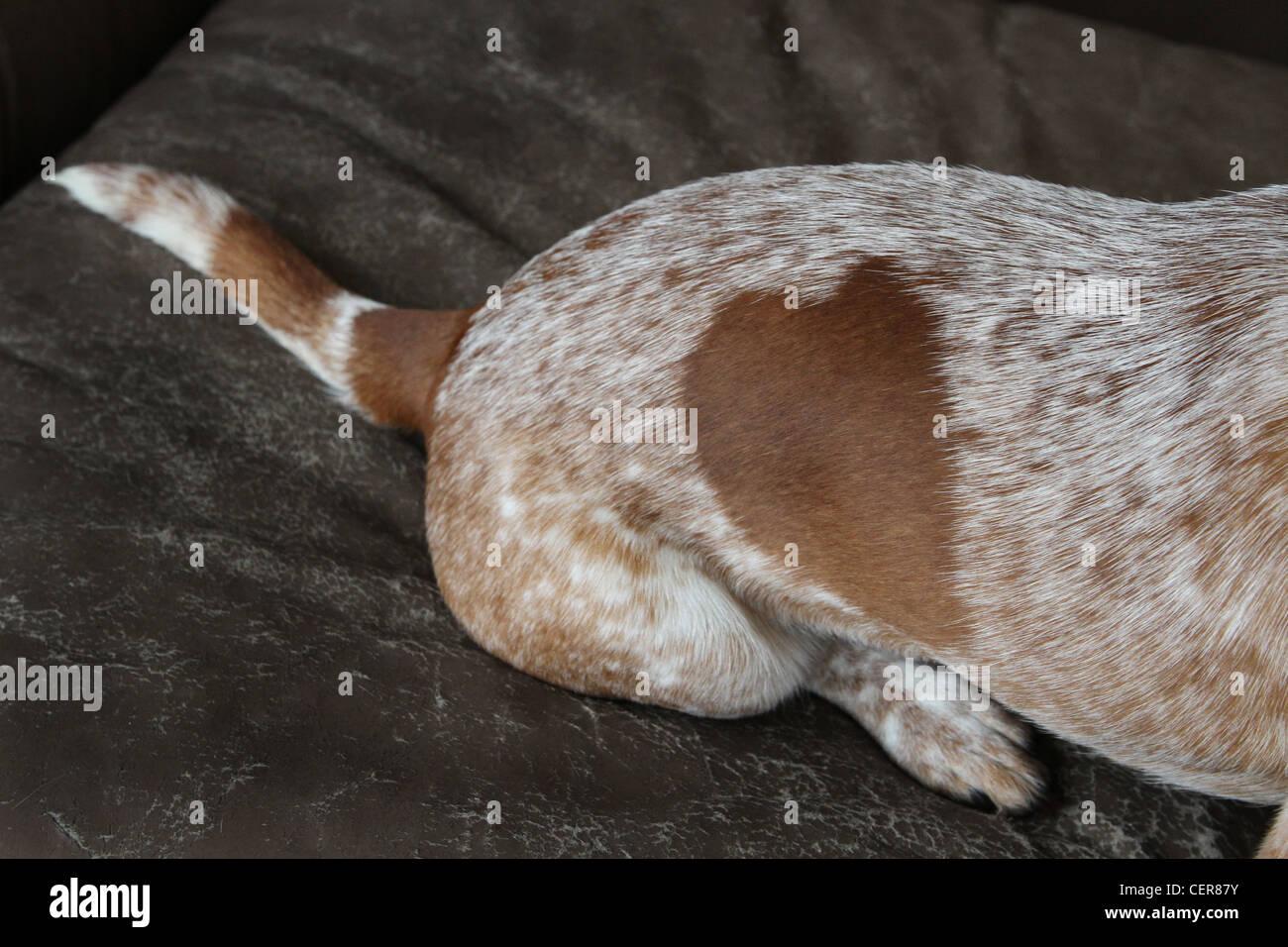 Una chiusura di uno a forma di cuore sul posto un cane. Immagini Stock