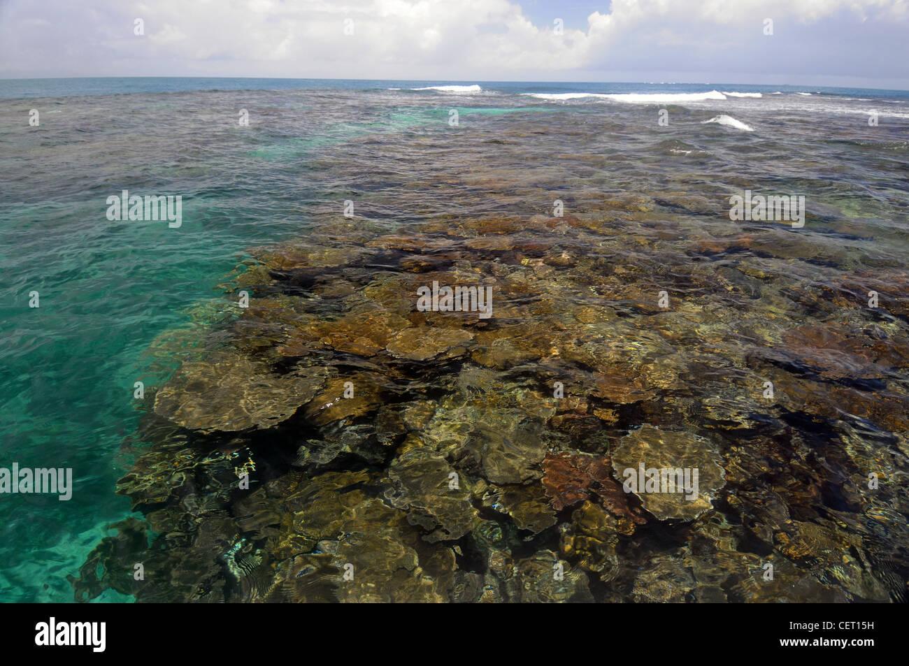 Una sana barriera corallina vicino Lautoka, Isole Figi Immagini Stock