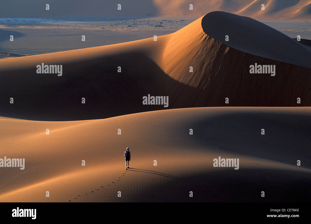 Battistrada arditamente sulle dune di sabbia, Namib Desert, Namibia, Africa Immagini Stock