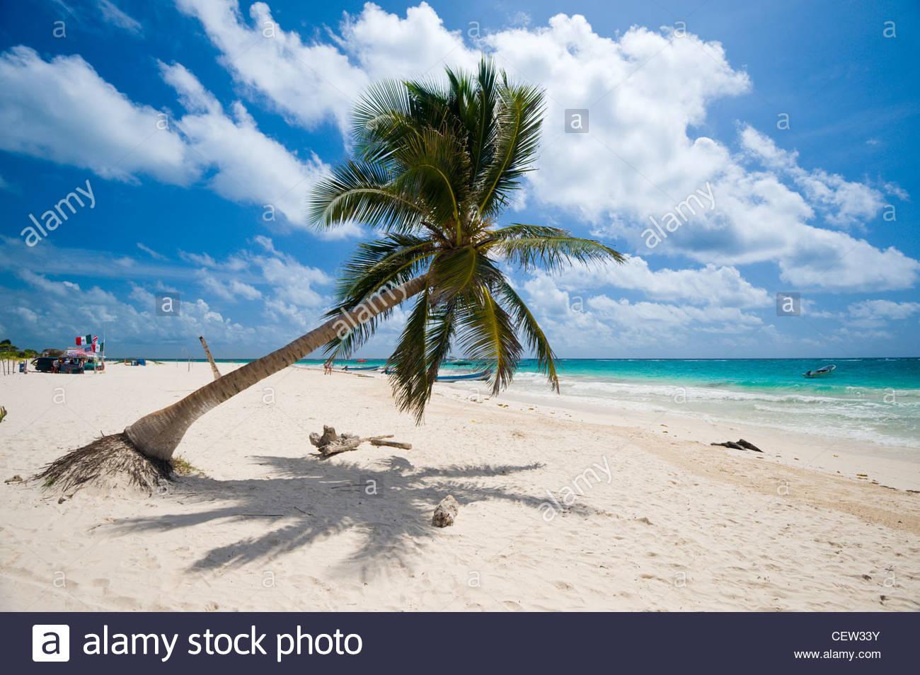 Palm Tree sulla spiaggia di Tulum, Quintana Roo, la penisola dello Yucatan, Messico. Foto Stock