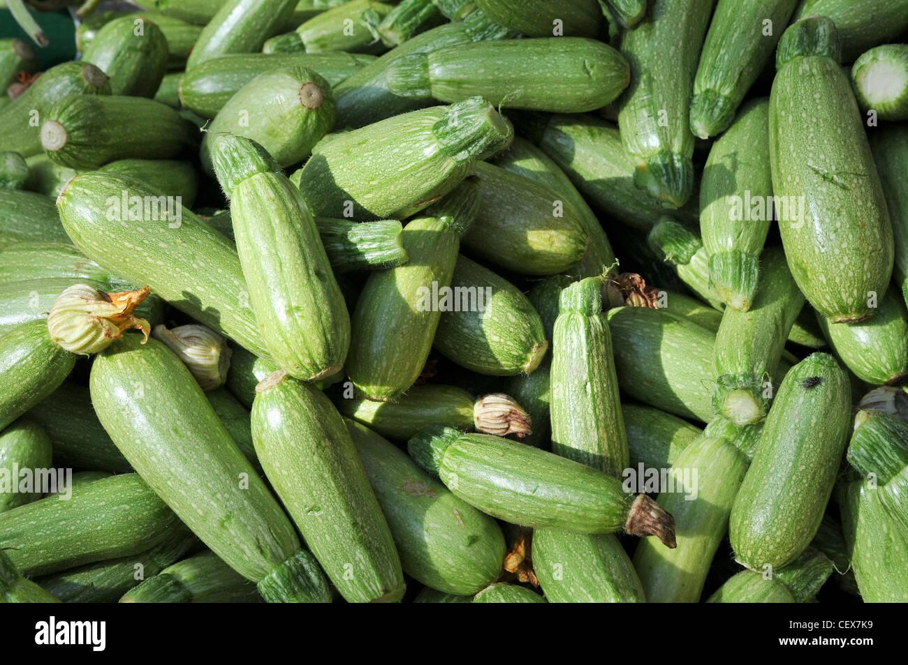 Un mucchio di zucchine fresche (zucchine) Immagini Stock
