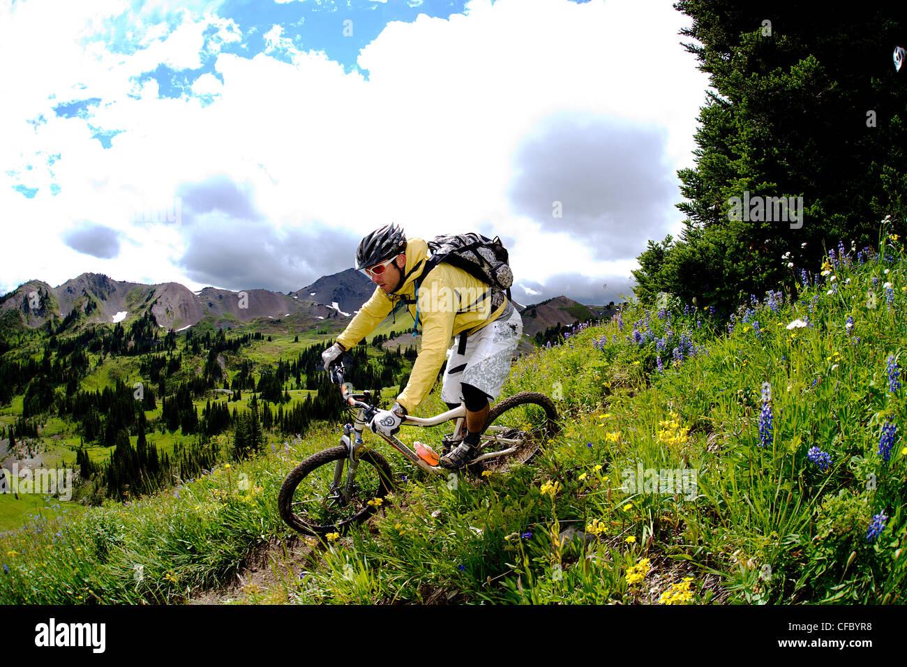Chilco mountain bike leccare Creek, British Columbia, Canada Immagini Stock