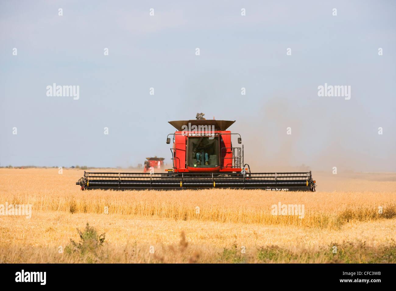 La combinazione di grano agricoltore potrebbe usare la propria mietitrebbia Immagini Stock