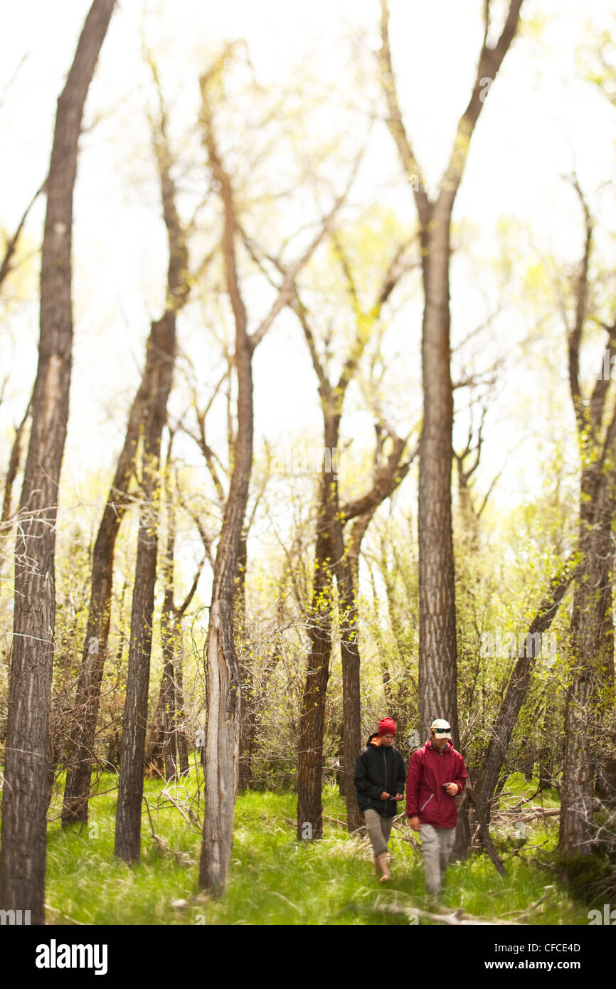 Due uomini a piedi attraverso una foresta incandescente alla ricerca di funghi in Montana. Immagini Stock
