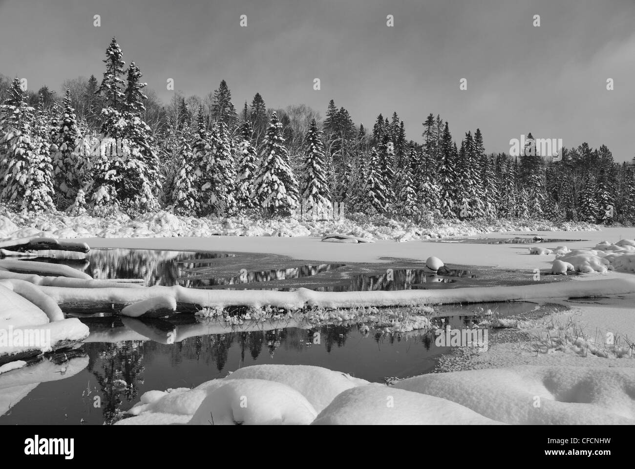 Fresco di neve caduti in una bellissima naturale scena invernale di Algonquin Park, Ontraio canada Immagini Stock