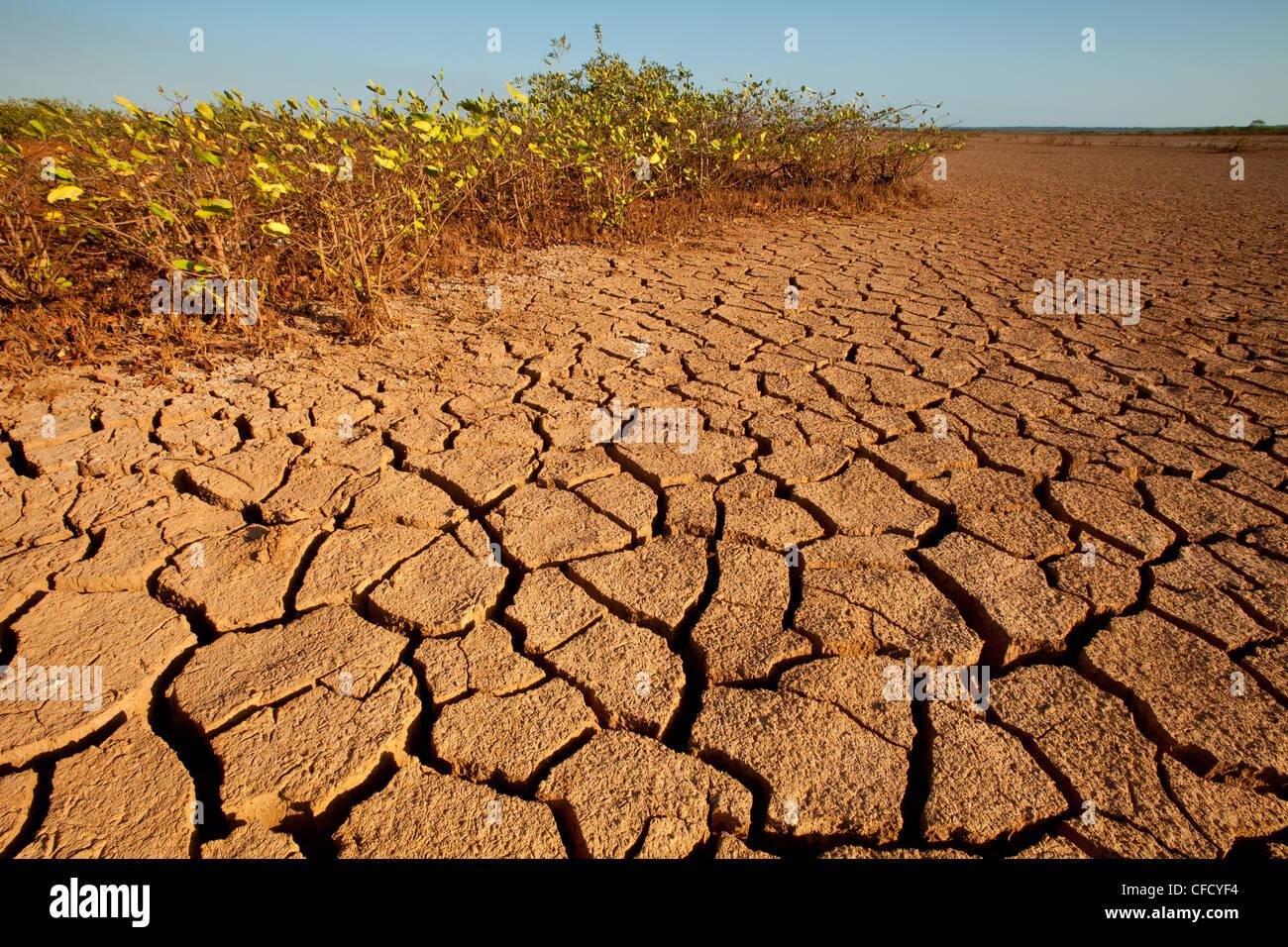 Massa fessurato in Sarigua national park (deserto) in Herrera provincia, Repubblica di Panama. Immagini Stock