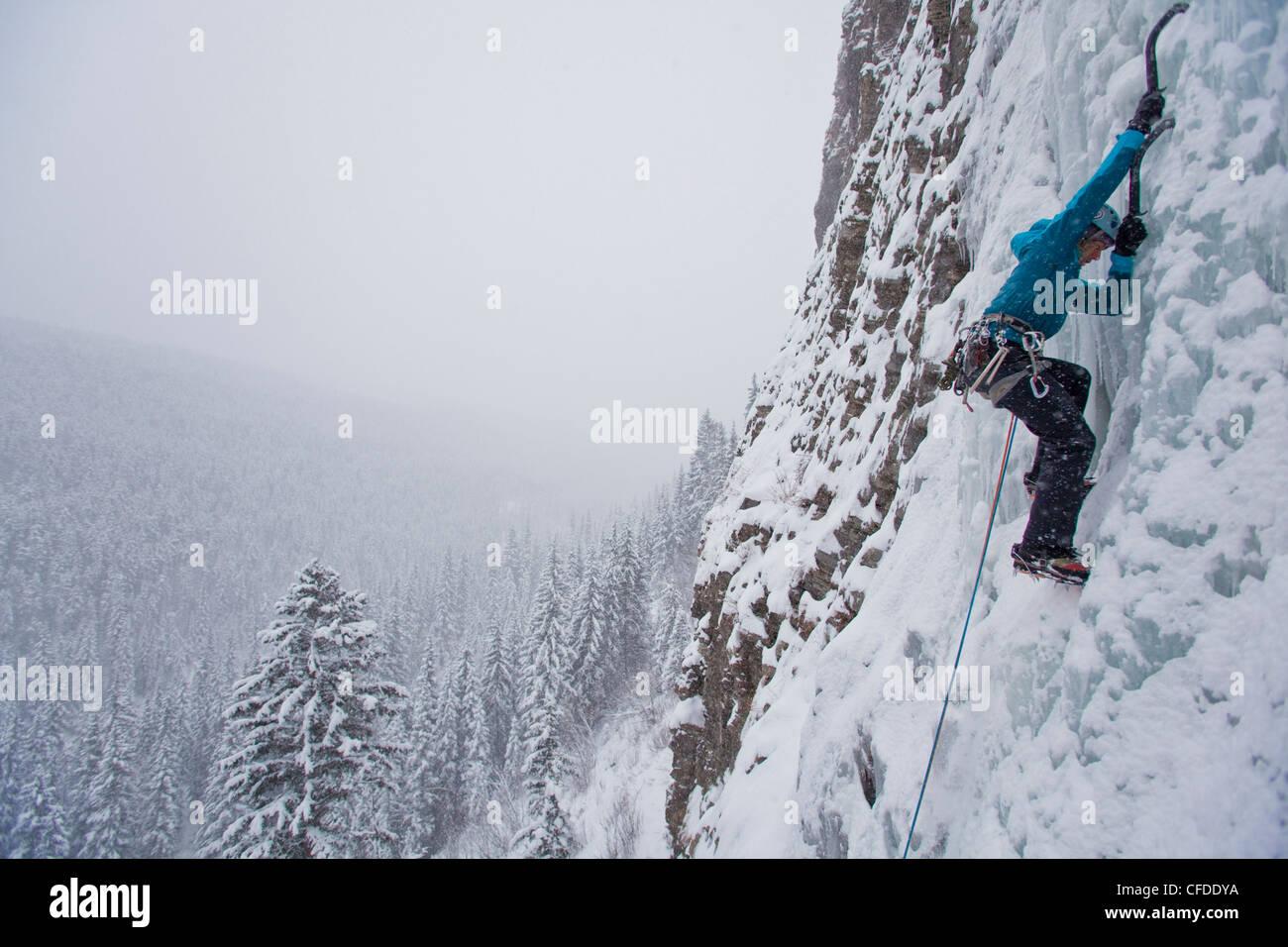Un forte scalatore femmina salite di ghiaccio Moonlight WI4, anche Thomas Creek, Kananaskis, Alberta, Canada Immagini Stock