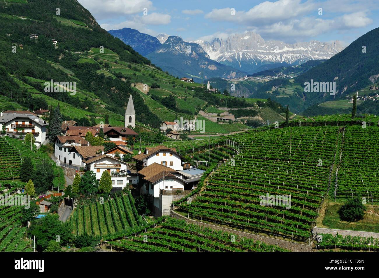 Vigneto e case sotto cielo velato, Bolzano Rentsch, Dolomiti, Alto Adige, Alto Adige, Italia, Europa Immagini Stock