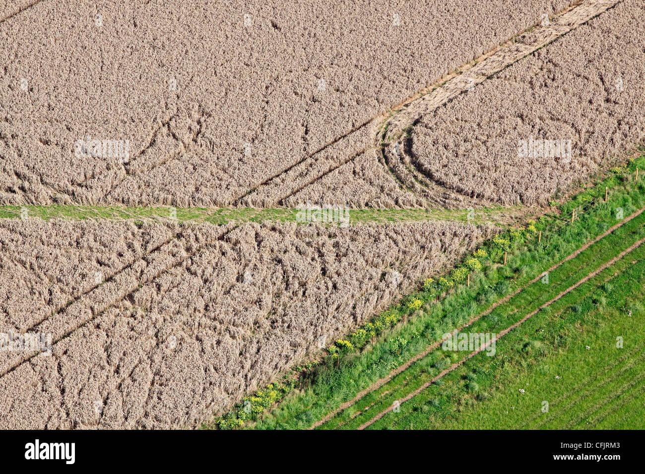 Vista aerea di danneggiare il raccolto in un campo di grano Immagini Stock