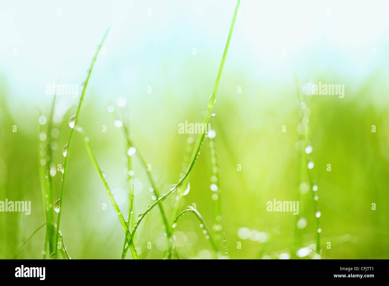 Erba verde con gocce d'acqua,Closeup. Immagini Stock