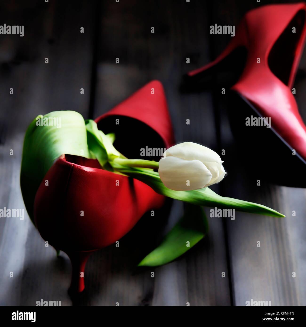 Un tulipano in una scarpa Immagini Stock