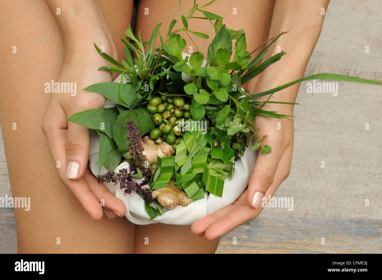 Gli ingredienti delle compresse alle erbe, Filippine, Sud-est asiatico, in Asia Immagini Stock