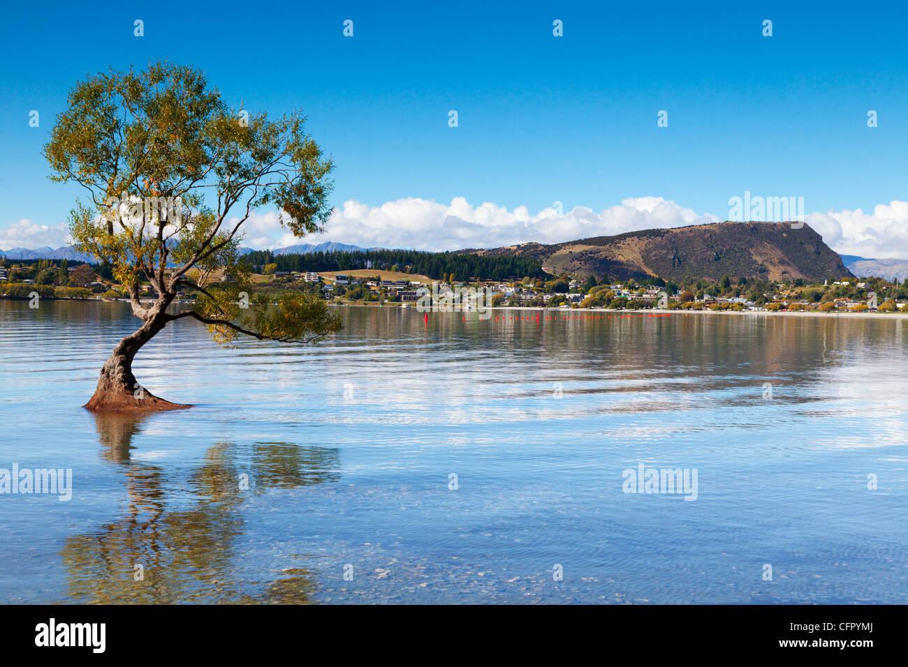 Nel tardo pomeriggio presso il lago Wanaka, Otago, Nuova Zelanda. Immagini Stock