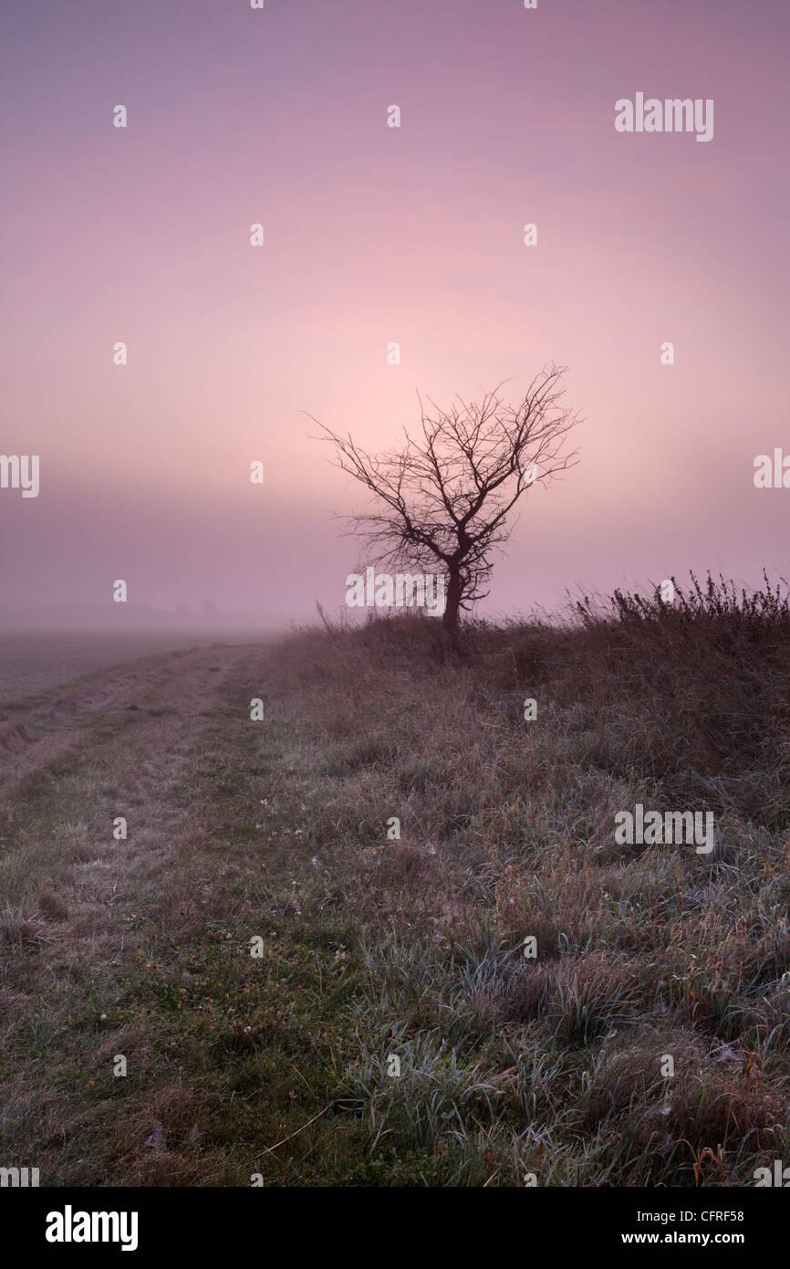 E splendidamente colorata misty dawn in campagna vicino Antingham, Norfolk, Inghilterra, Regno Unito, Europa Immagini Stock