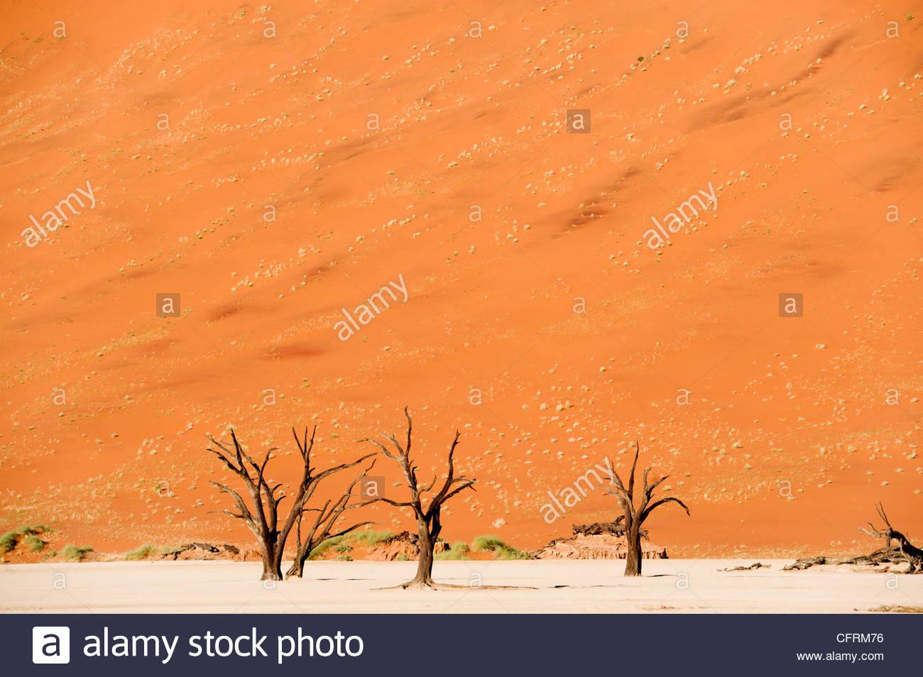 Dead Vlei, Parco Namib-Naukluft, Namibia Immagini Stock