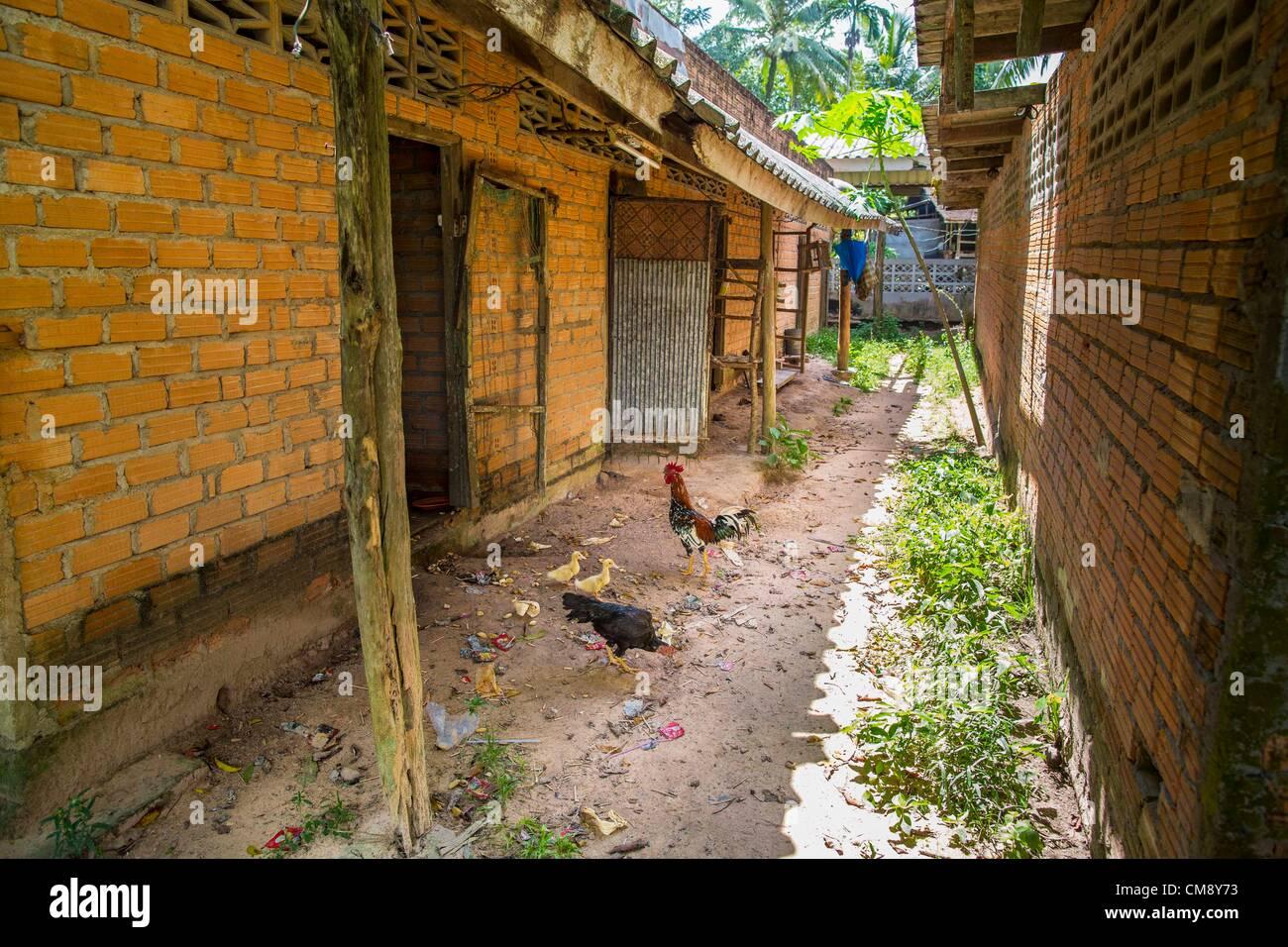 Ottobre 29, 2012 - Mayo, Pattani, Thailandia - Polli peck nella sporcizia tra le file dei pazienti' le camere Immagini Stock