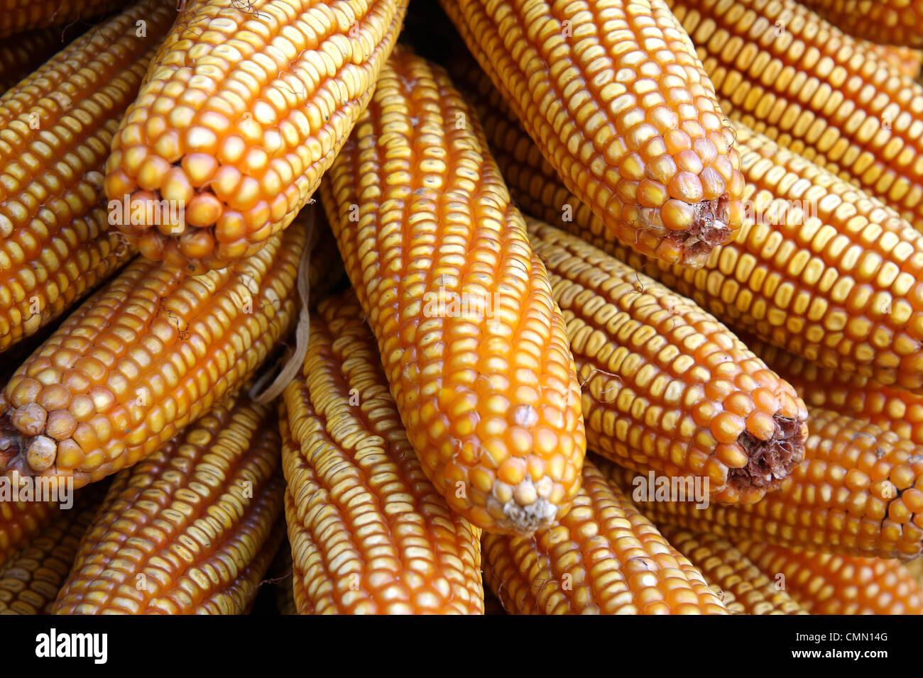 Un mazzetto di tutoli di mais essiccato in un mercato ortofrutticolo di Kunming, in Cina. Immagini Stock