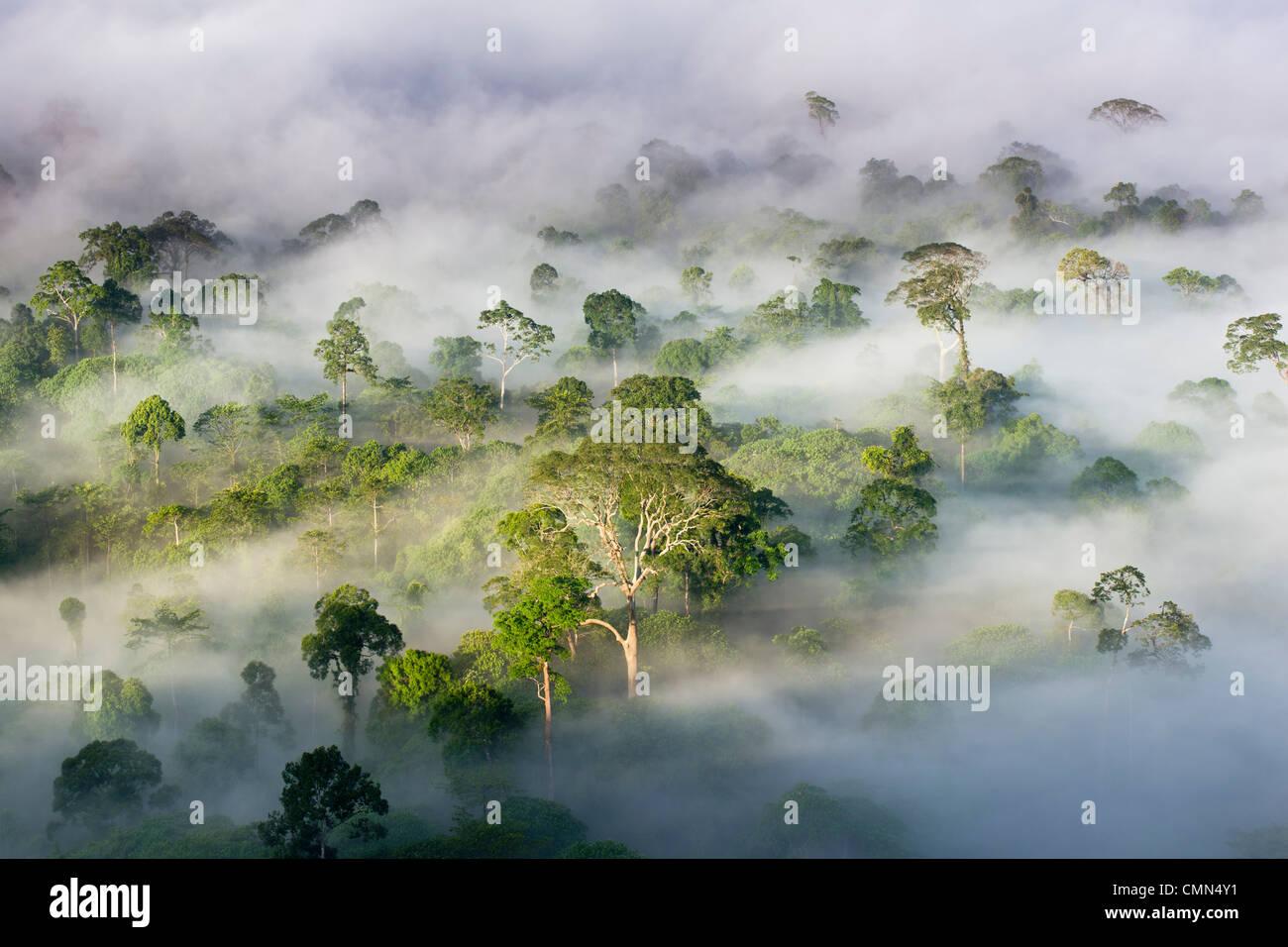 La nebbia e basse nubi appesa sopra Lowland Dipterocarp foresta pluviale, poco dopo l'alba. Cuore di Danum Valley, Sabah Borneo. Foto Stock