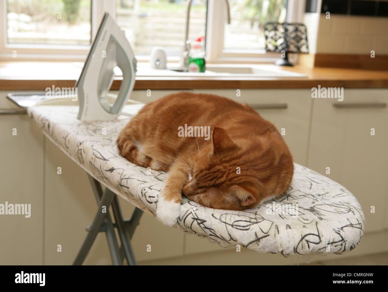 Il gatto domestico singolo adulto dormire su un asse da stiro Regno Unito Immagini Stock