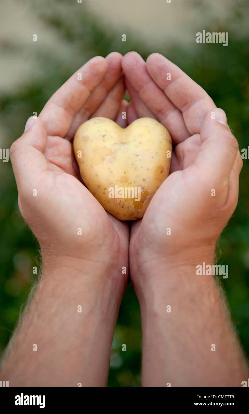 Close-up della mano umana tenendo la patata Immagini Stock
