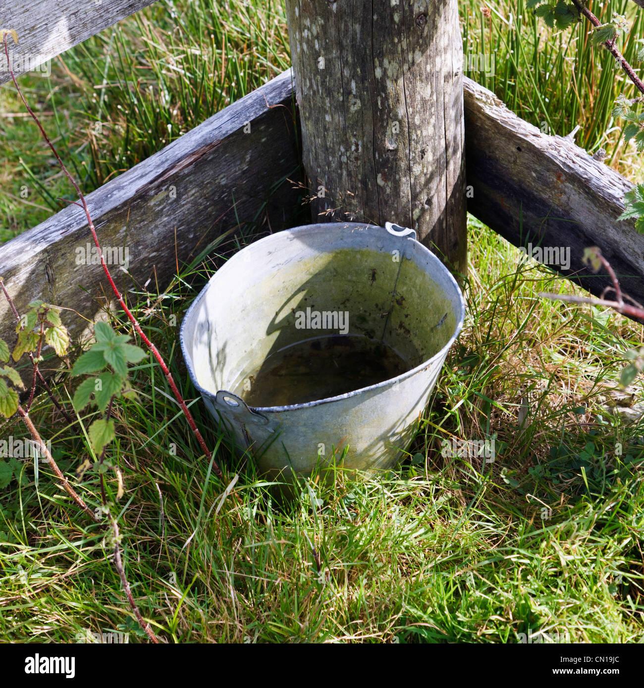 Secchio di acqua per gli animali contro la recinzione, Molly Gallivan's Cottage e fattoria tradizionale Visitor Immagini Stock