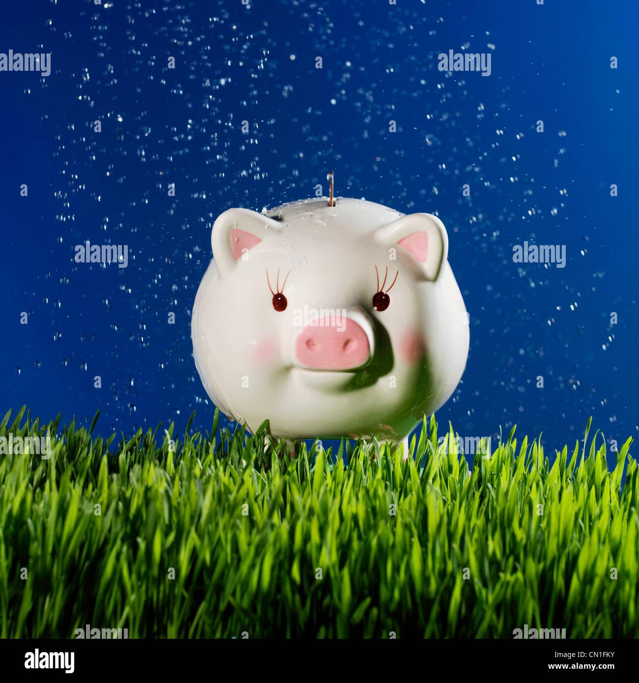 Le goccioline di acqua sul porcellino salvadanaio sull'erba Immagini Stock