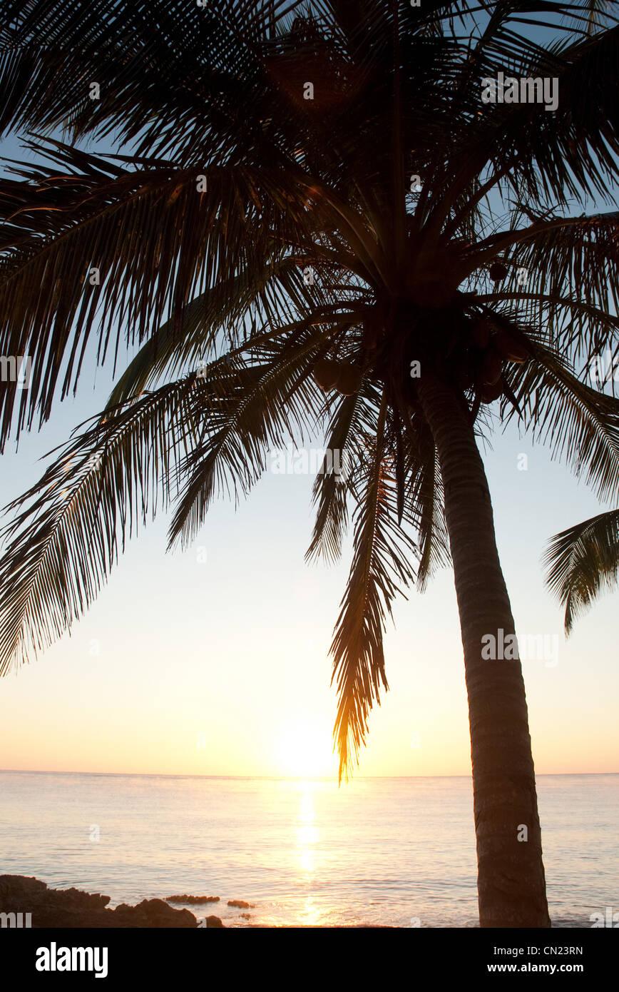 Palm Tree sulla spiaggia, Tulum, Messico Immagini Stock