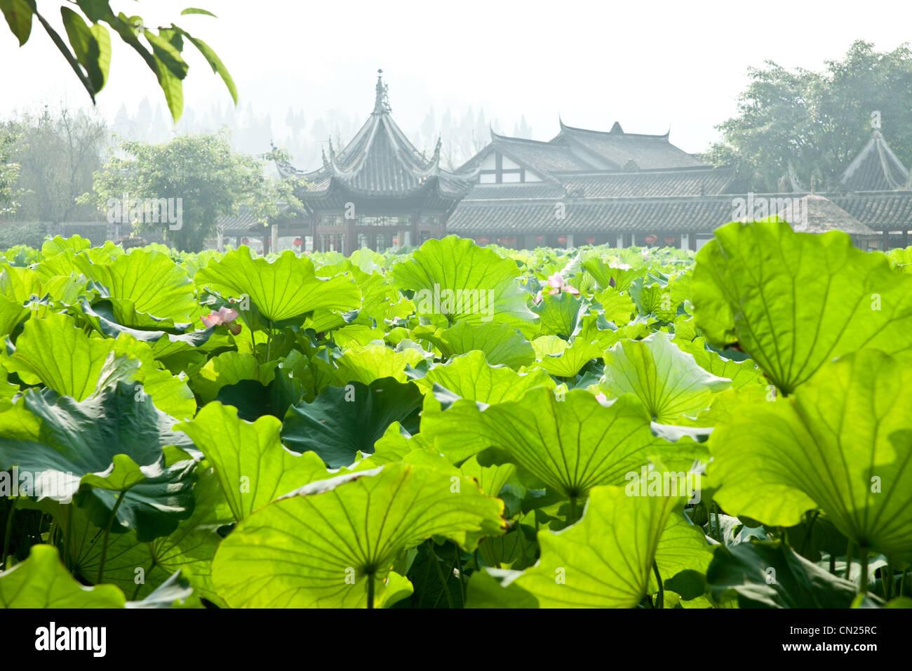Foglie di Lotus con tradizionali edifici cinesi in background Immagini Stock