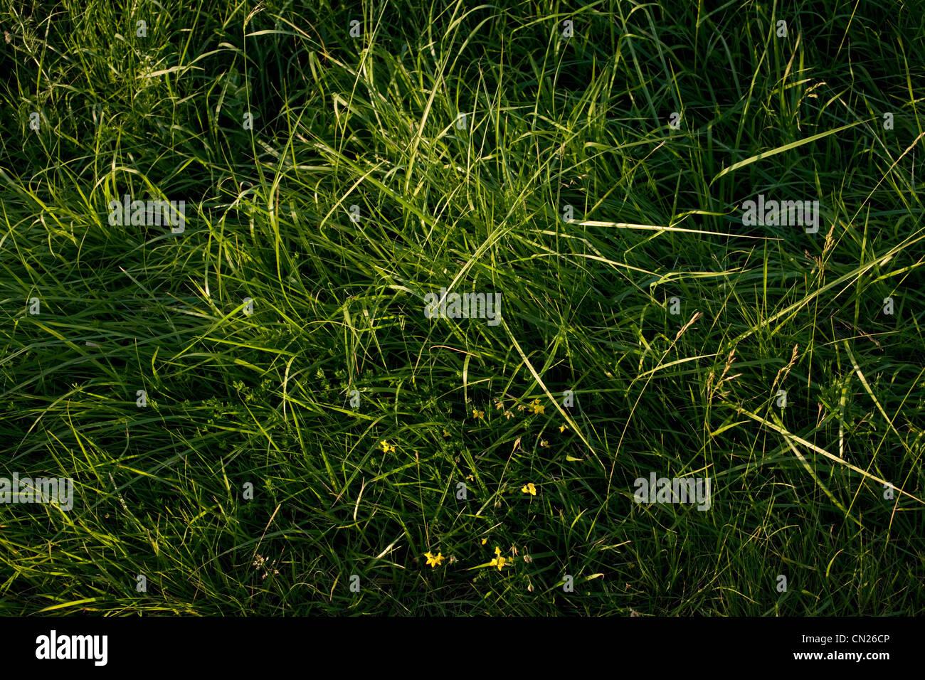 Verde erba, frame completo Immagini Stock