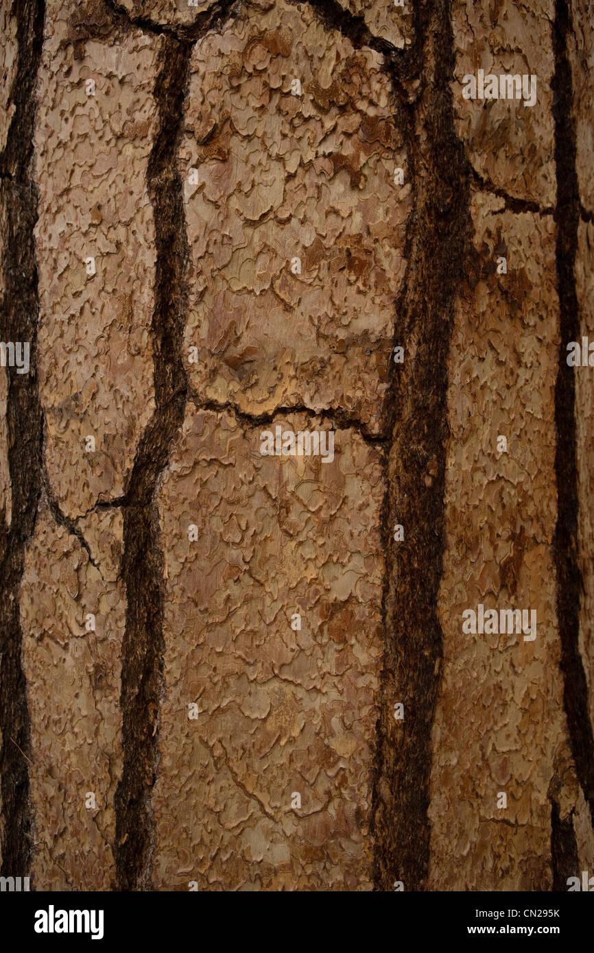Corteccia di albero, full frame Immagini Stock