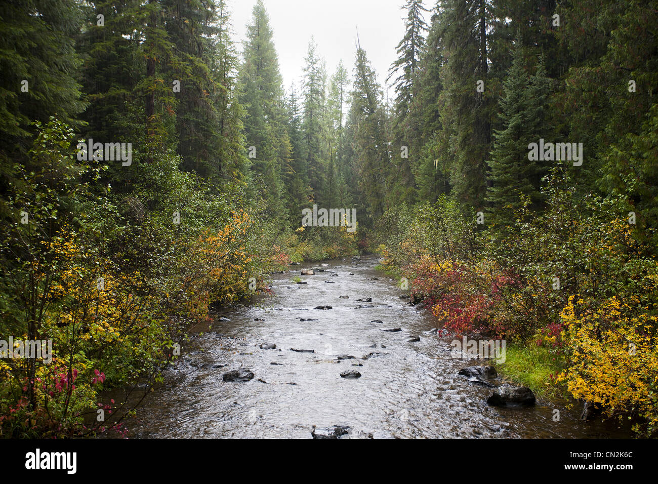 Misty River in foresta, Montana, USA Immagini Stock