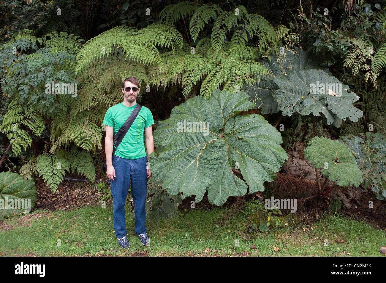 Uomo in piedi da grandi foglie, il Parco Nazionale del Vulcano Poas, Costa Rica Immagini Stock