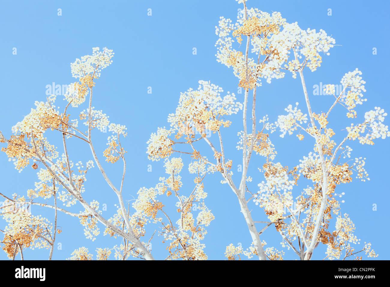 Impianto contro il cielo blu chiaro Immagini Stock