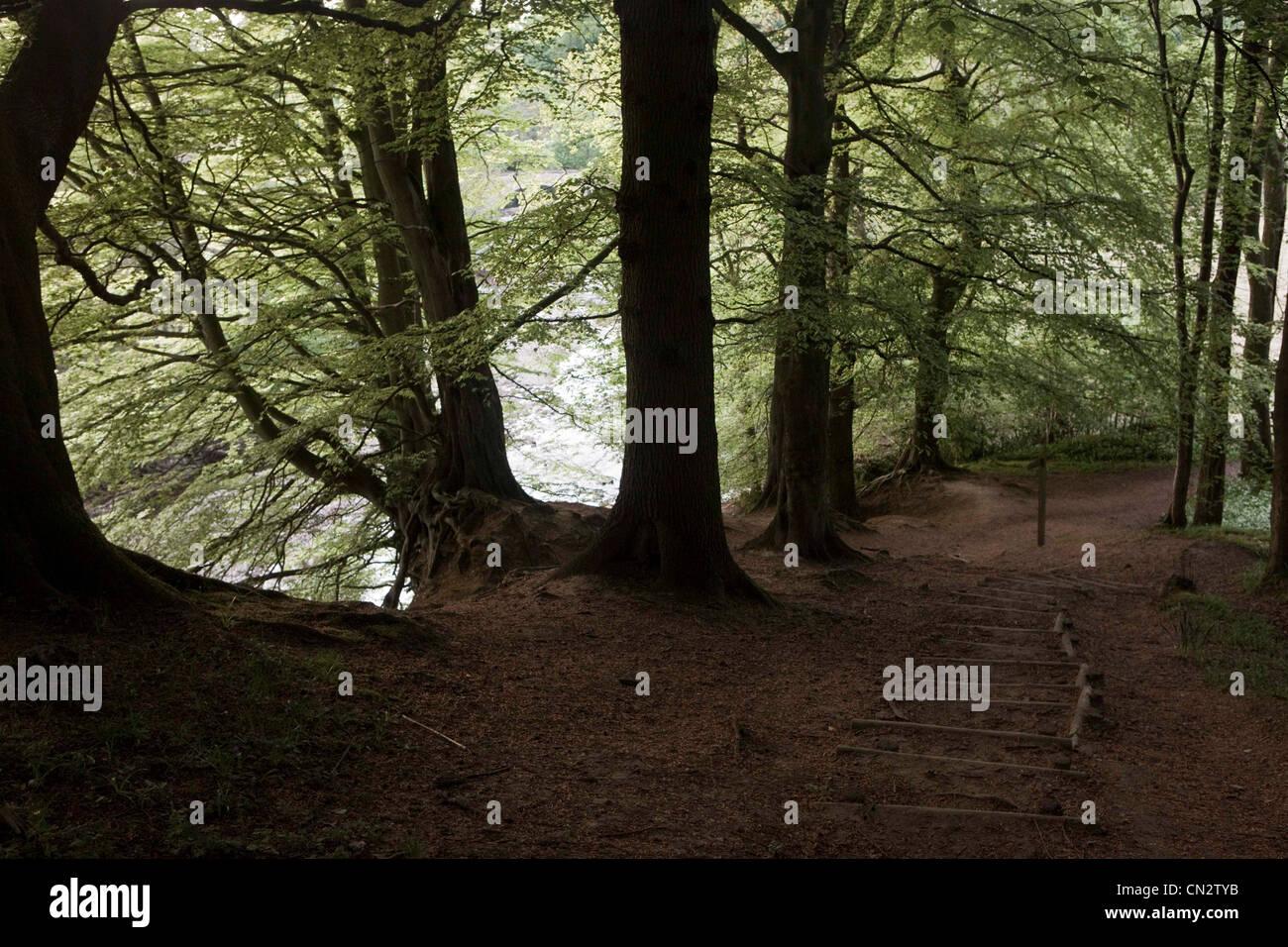 Scena della foresta Immagini Stock
