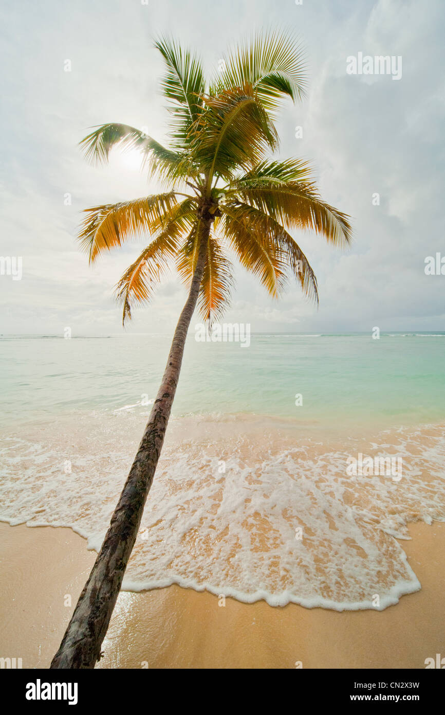 Palm tree dal mare, Pigeon Point, Tobago Immagini Stock