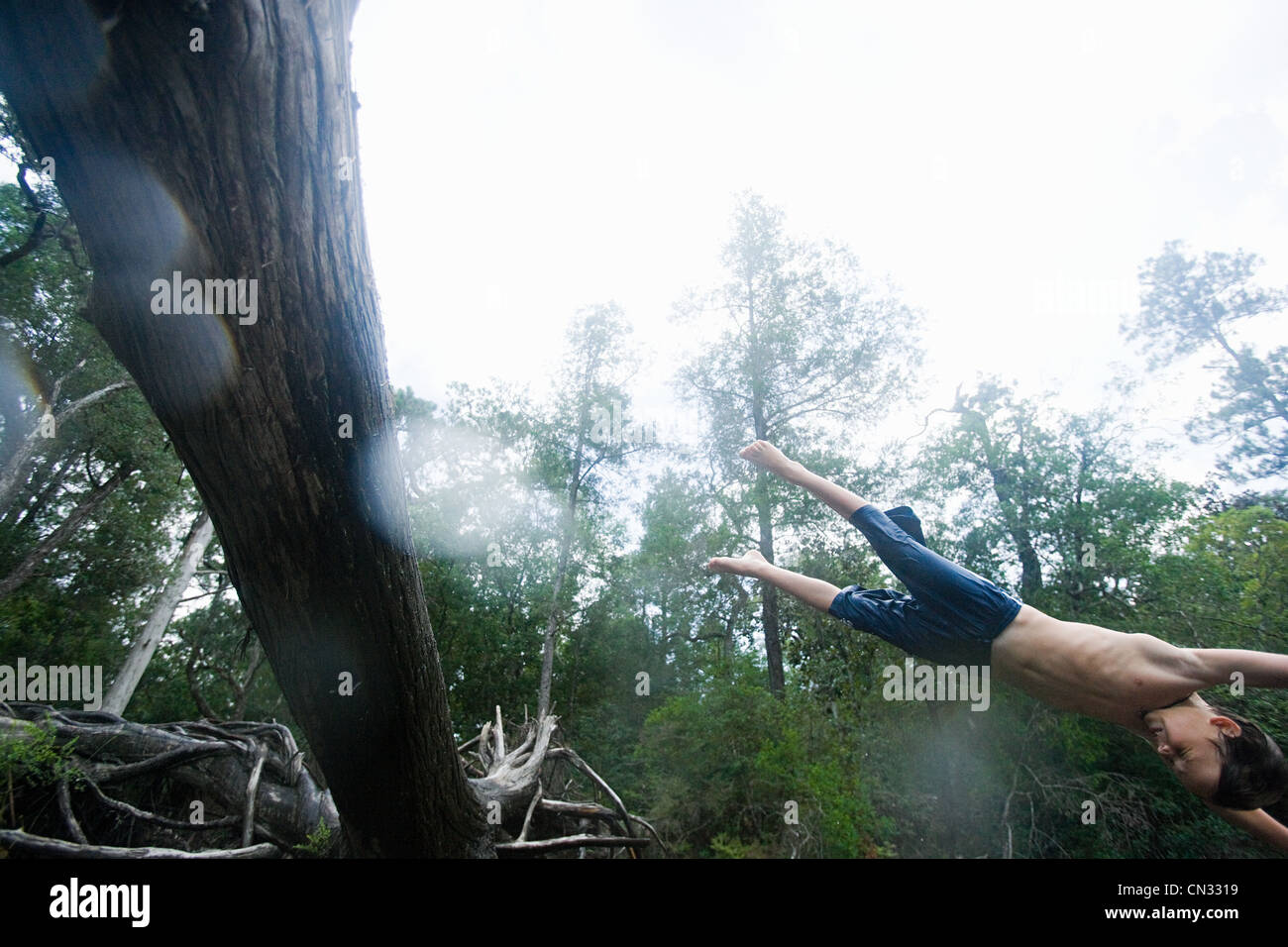 Ragazzo diving off tree Immagini Stock