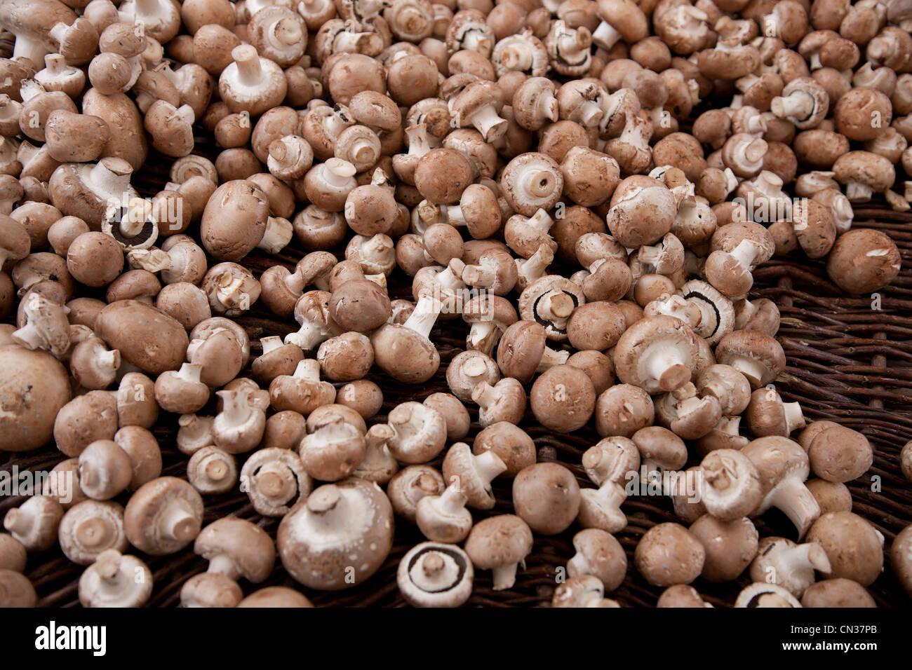 Funghi champignon Foto Stock